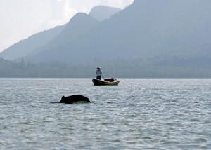 Ayeyarwaddy Dolphin
