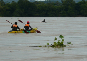 Ayeyarwaddy Dolphins Myanmar