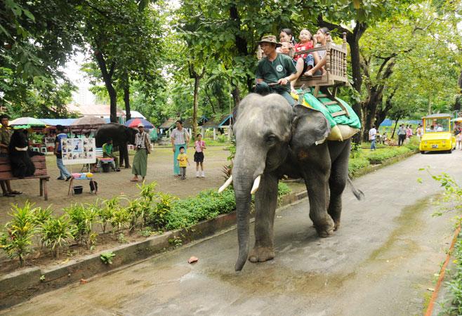 Zoological Garden - Yangon Myanmar
